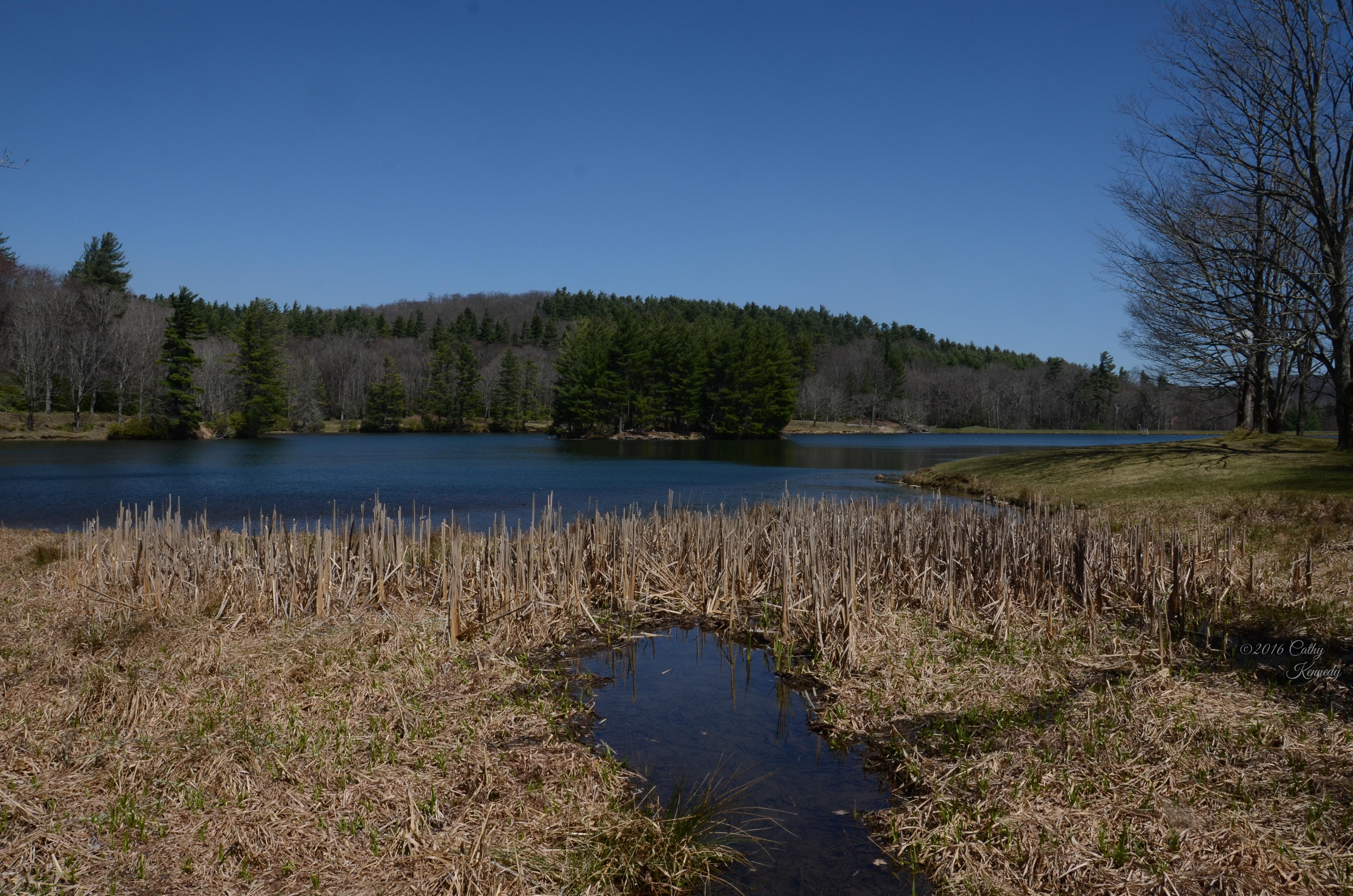 Bass Lake near Moses Cone DSC_6151